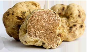 tartufo-bianco-montefeltro-tartufi